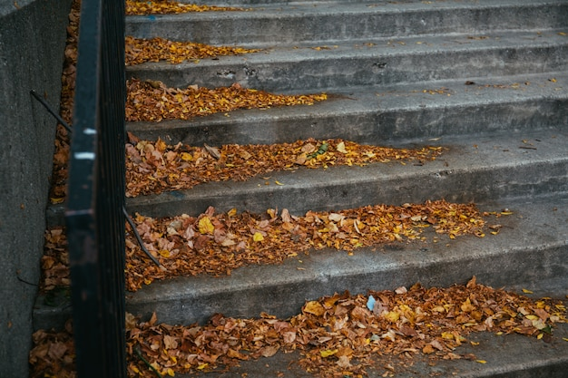 Piękny strzał kolorowi jesień liście spadać na schodkach