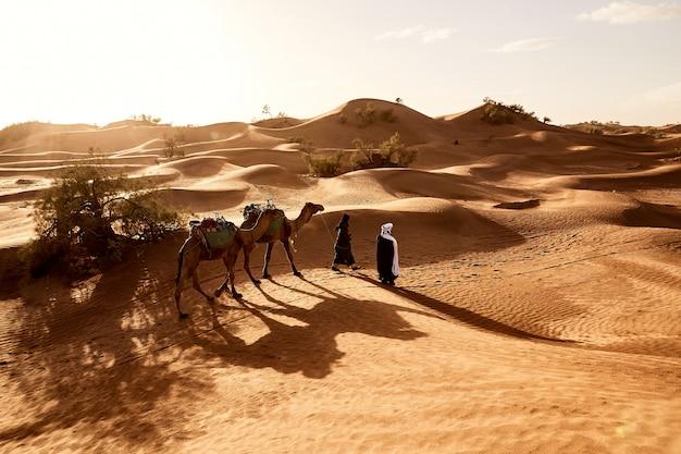 Piękny strzał ludzi chodzących ze swoimi wielbłądami na pustyni erg lihoudi w maroku