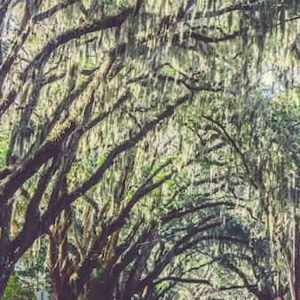 Piękny strzał płaczący wierzbowi drzewa w parku