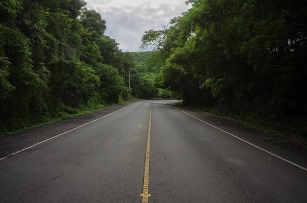 Piękny strzał pusta droga po środku lasu