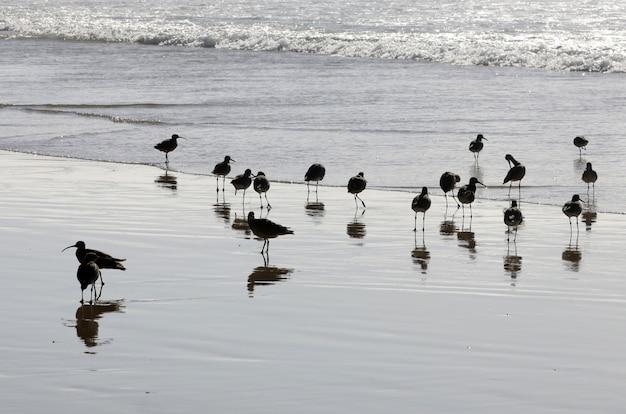 Piękny strzał stada czarnych ptaków w oceanie z ich odbiciem w wodzie