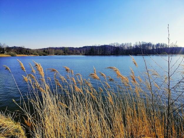 Piękny; strzał trzciny nad brzegiem jeziora w jeleniej górze.