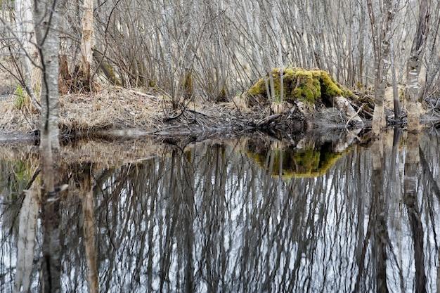 Piękny strzał woda odbija drzewa na brzeg