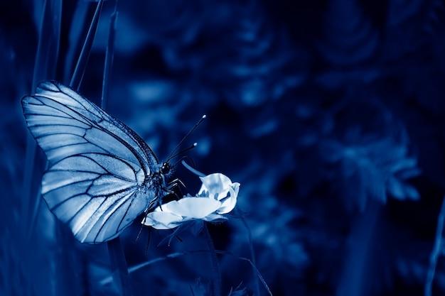 Piękny strzał z czarnymi żyłkami białego motyla na zielonej roślinie w lesie. kreatywne barwienie. trend w klasycznym niebieskim kolorze. kolor 2020. selektywne skupienie. letni krajobraz naturalny. nieostrość.