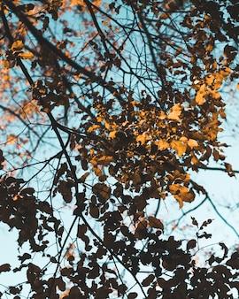 Piękny strzał złoci liście na gałąź drzewo podczas jesieni