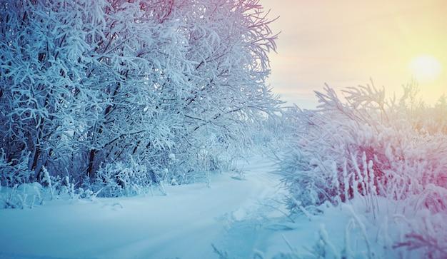 Piękny świąteczny krajobraz, na tle zachodu słońca, pokryte śniegiem gałęzie drzew