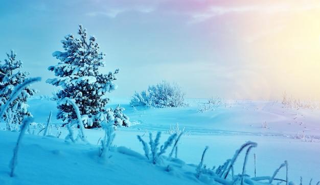 Piękny świąteczny krajobraz ± zimowy krajobraz z sosnowym lasem nadmorskich wydm