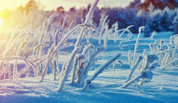 Piękny świąteczny krajobraz ± zimowy krajobraz z sosnowym lasem