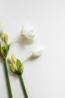 Piękny świeży kwiat z pączkami na białym textured tle