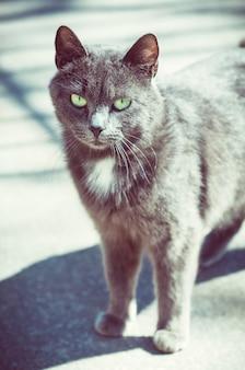 Piękny szary kot chodzenie po drodze