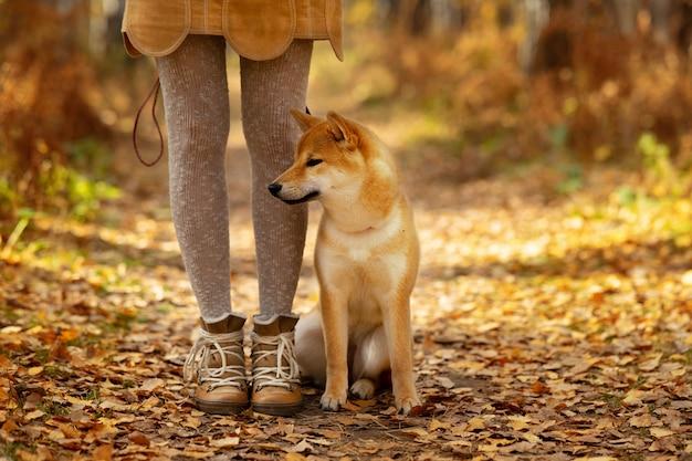 Piękny szczeniaka psa shiba inu na kolorowym jesień krajobrazie