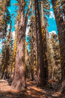 Piękny szlak z punktu taft do sentinel dome w parku narodowym yosemite. stany zjednoczone