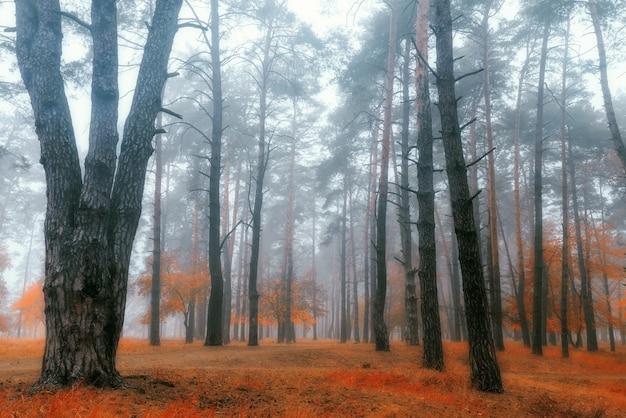 Piękny tajemniczy jesienny las w porannej mgle.