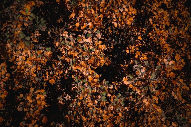 Piękny tło jesień krajobraz z kolorowymi suchymi liśćmi