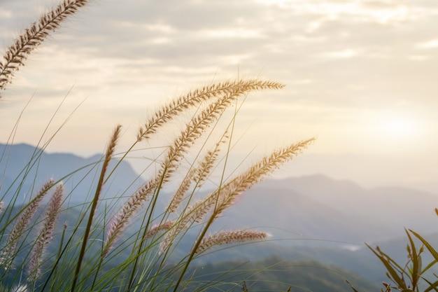 Piękny trawa kwiatów pole z słońcem zaświeca w niebie dla jesieni i lata tła, trawy pole w wieczór