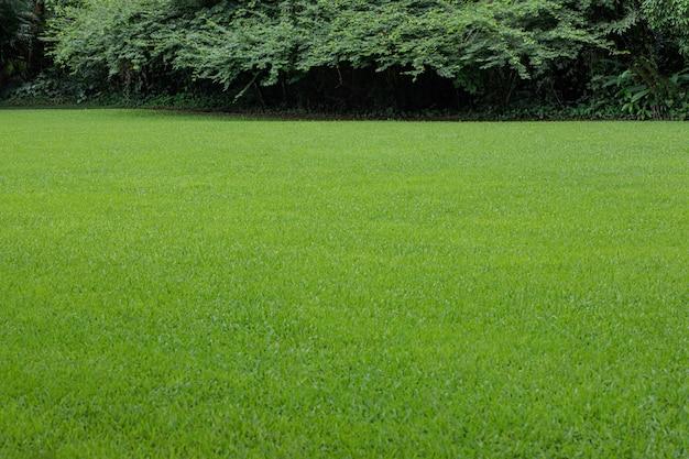 Piękny trawnik w naturalnym krajobrazie