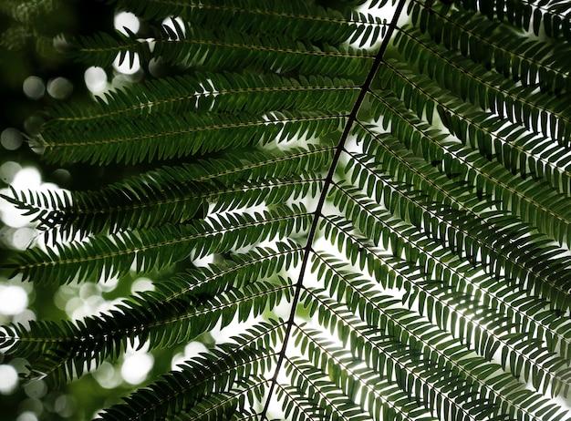 Piękny tropikalny liść zbliżenie