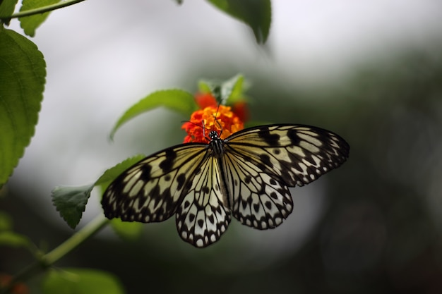 Piękny tropikalny motyl na zamazanym natury tle