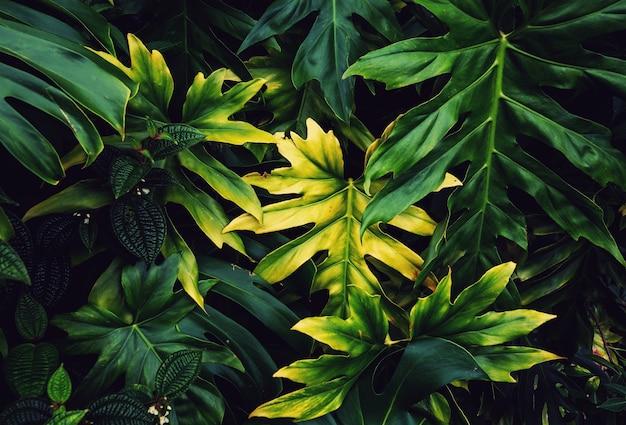 Piękny tropikalny ogród na hawajach