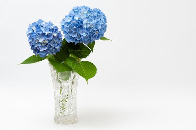 Piękny układ kwiatów hortensji macrophylla w szklanym wazonie na białym tle