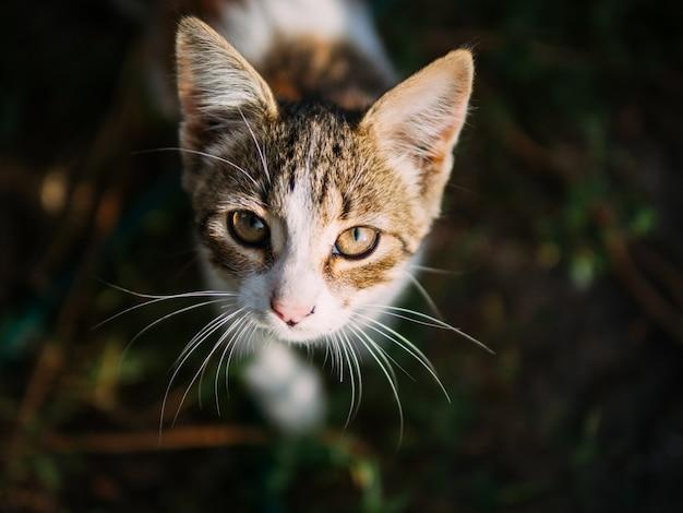 Piękny uliczny małego kota portret