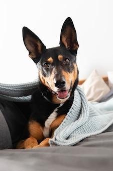 Piękny uśmiechnięty pies z kocem