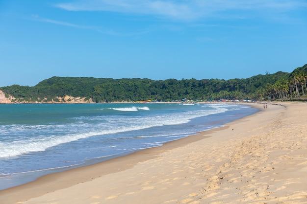Piękny widok drzewo zakrywająca plaża falistym oceanem chwytającym w pipa, brazylia