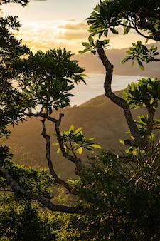 Piękny widok gałęzi drzew z zielonymi liśćmi pień fotografia