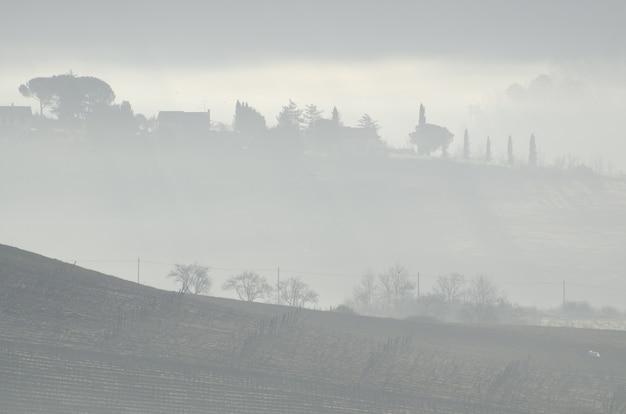 Piękny widok na drzewa na wzgórzu w pobliżu gospodarstw uchwycony w mglistej pogodzie