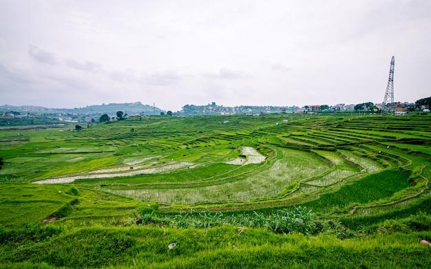 Piękny widok na farmę ryżową z zielenią ryżową, katmandu, nepal.