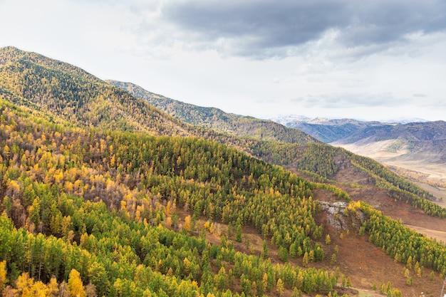 Piękny widok na kolorowy mieszany las brzozowych świerkowych stoków górskich w ałtaju w rosji