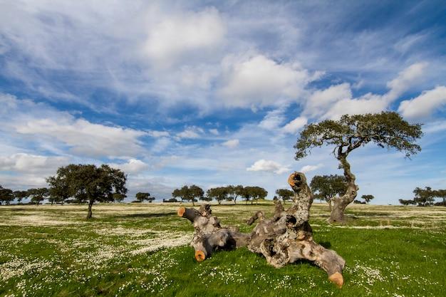 Piękny widok na krajobraz wsi wiosną w regionie alentejo, portugalia.