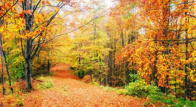 Piękny widok na las w słoneczny dzień. jesienny krajobraz. karpaty. ukraina