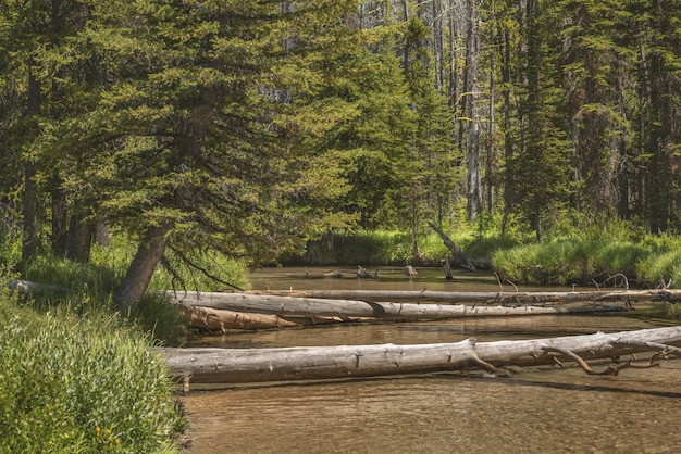 Piękny widok na las z zielonymi roślinami i połamanymi drzewami nad rzeką w ciągu dnia
