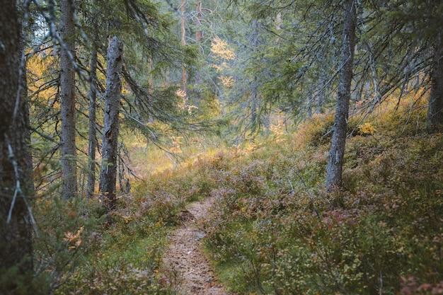 Piękny widok na porośnięte trawą wzgórza i drzewa w lesie
