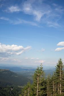 Piękny widok na przyrodę w świetle dziennym