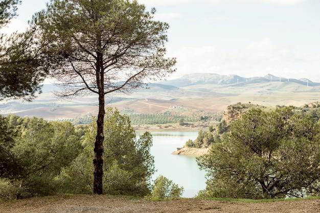 Piękny widok na przyrodę z jeziorem i drzewami