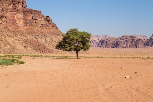 Piękny widok na pustynię wadi rum w jordańskim królestwie haszymidzkim, znaną również jako dolina księżyca.