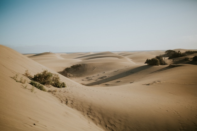 Piękny widok na pustynne wydmy porośnięte zielonymi krzewami - idealne na tapetę
