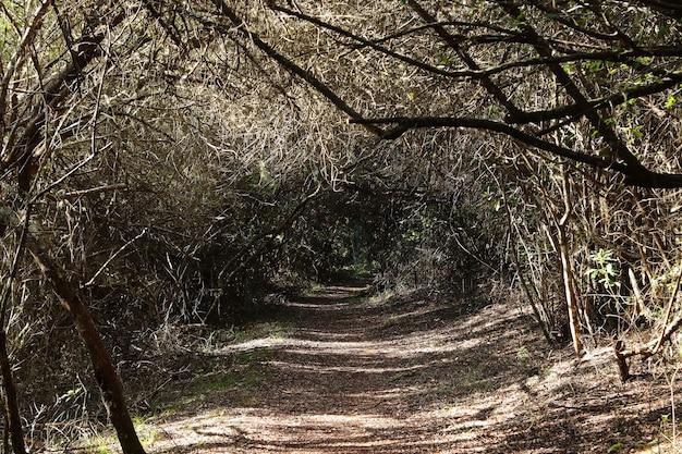 Piękny widok na ścieżkę przechodzącą przez tunel wykonany przez drzewa