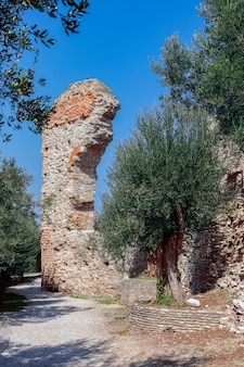 Piękny widok na stare drzewo oliwne otoczone starożytnym rzymskim zrujnowanym łukiem we włoszech