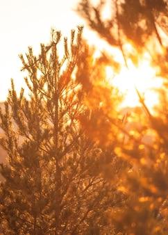 Piękny widok na światło słońca