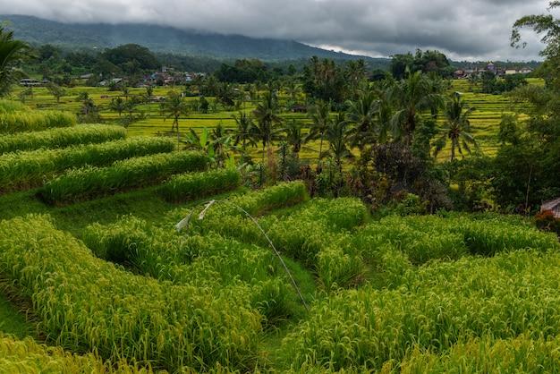 Piękny widok na tarasy ryżowe w letni dzień. krajobraz tarasów ryżowych.
