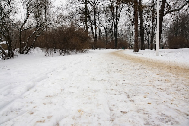 Piękny widok na ulicę parku i pokryte śniegiem drzewa w zimowy dzień