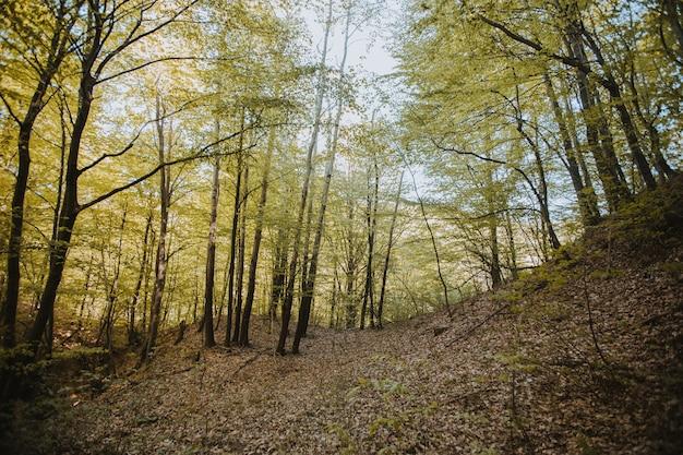 Piękny widok na wysokie drzewa w lesie pod słońcem