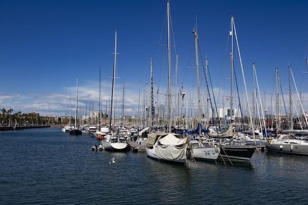 Piękny widok na żaglówki przez port pod jasnym błękitnym niebem