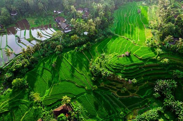 Piękny widok na zielone tarasy ryżowe