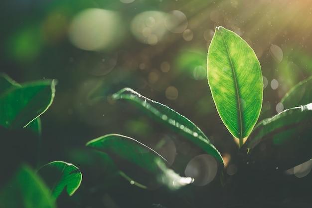 Piękny widok natury zielonego liścia na belce i tle bokeh w ogrodzie,
