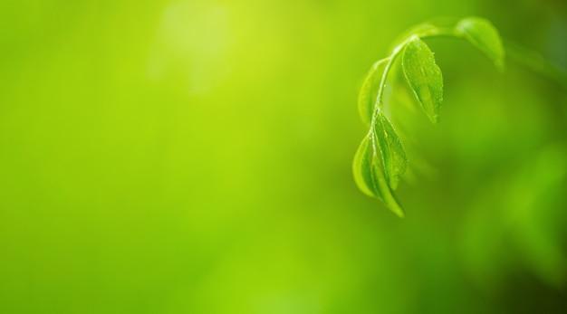 Piękny widok natury zielonego liścia na niewyraźne zielone tło w garde