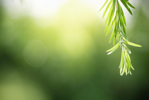 Piękny widok natury zielony liść na niewyraźnym tle zieleni w świetle słonecznym z bokeh i skopiuj przestrzeń, używając jako tła